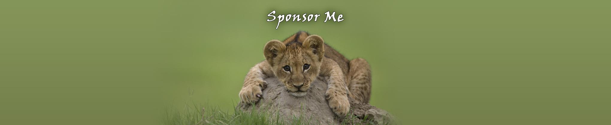 Sponsor Me Lion