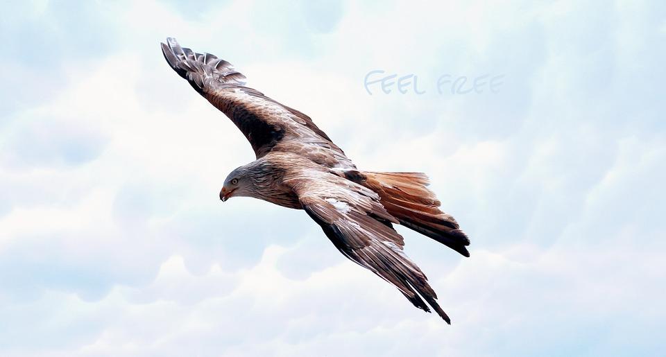 freedom-589576_960_720