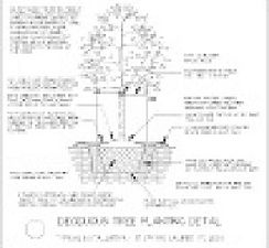 Shade Tree Planting