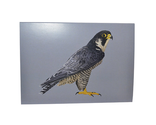 Illustrated greeting card - Peregrine Falcon