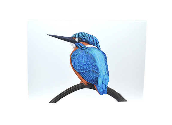 Illustrated greeting card - Kingfisher on Branch