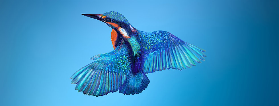 cleaned up kingfisher on blue.jpg