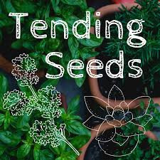 Episode 41: Betwixt and Between Tend Seeds