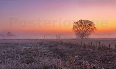 Nebel am Baum zum Frühlingsanfang