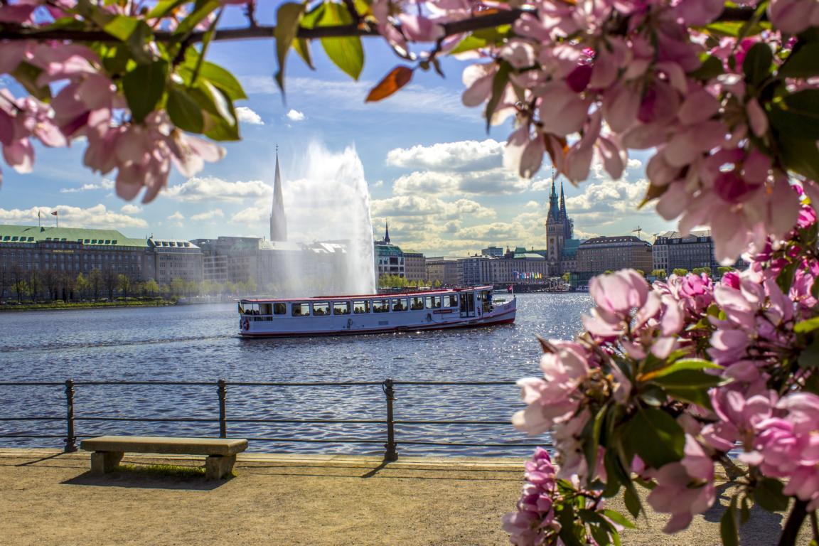 Kirschblüte an der Alster Hamburg zu