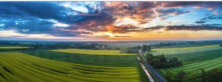 Rapsfeld Panorama aus der Luft