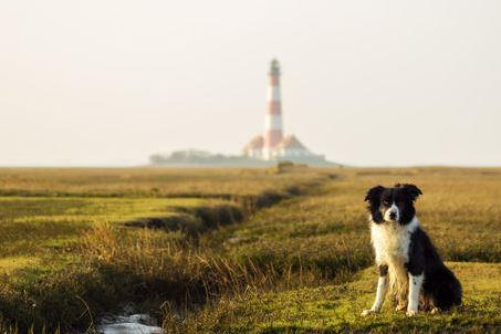 Leuchtturm Westerhever Nordsee