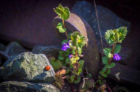 Kleiner Marienkäfer im alten Gleis