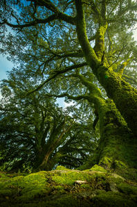 Fairytail Forest