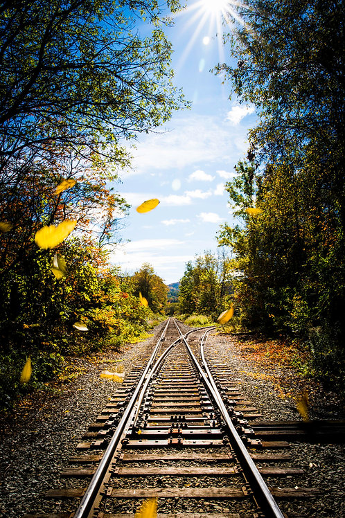 Autumn walks along the Tracks