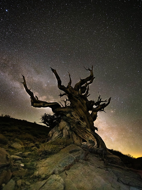 Cold Nights by the Bristlecone Tree