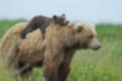 mother bear.jpg