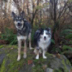 Fairytails dog daycare hikes