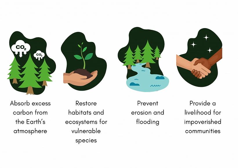 we plant trees to.webp