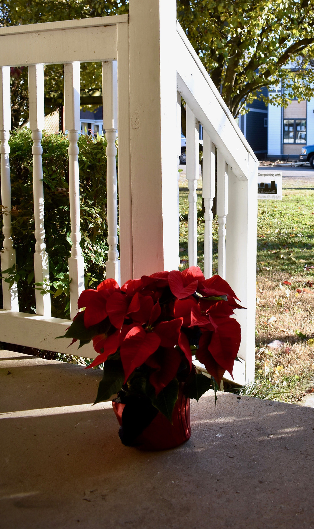 Poinsettias on Family Reconciliation Center's front porch, Christmas 2019