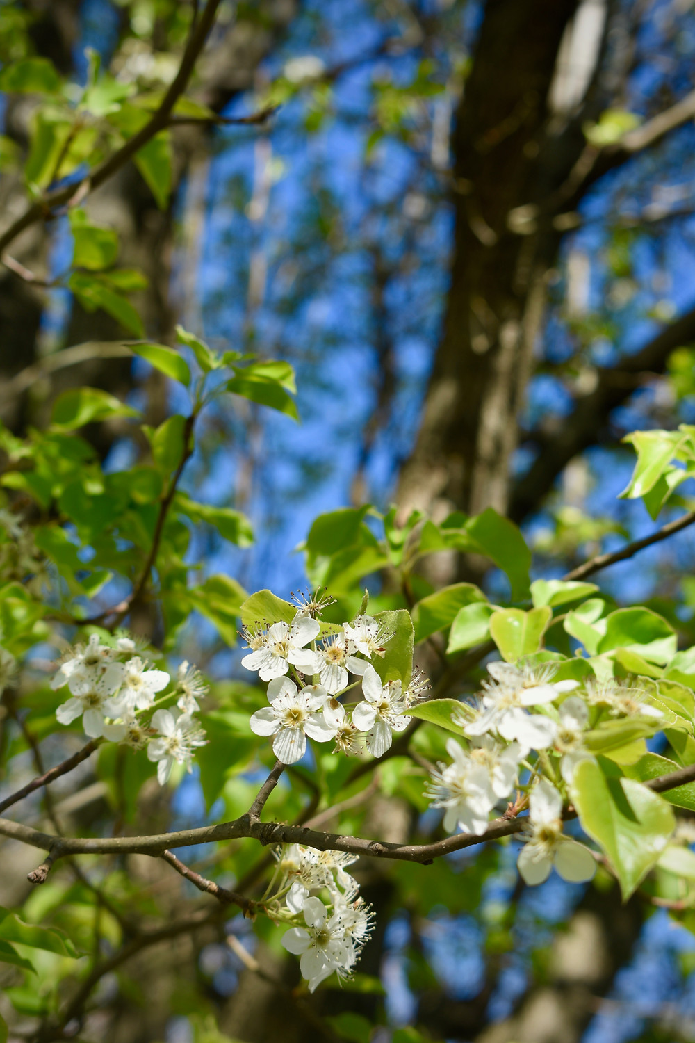 Flowers blooming on a tree in the sunshine.