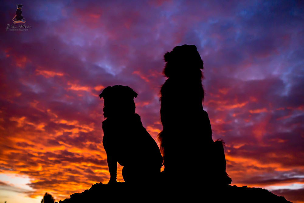 Tango and Chloe - Silhouette - Weston Park, Canberra