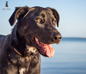 John Muir Photography | Logan | Brisbane Pet Photography | Sandgate