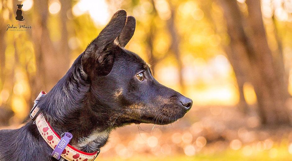 John Muir Photography | Jax - Terrier Cross | Brisbane Pet Photography | 7th Brigade Park