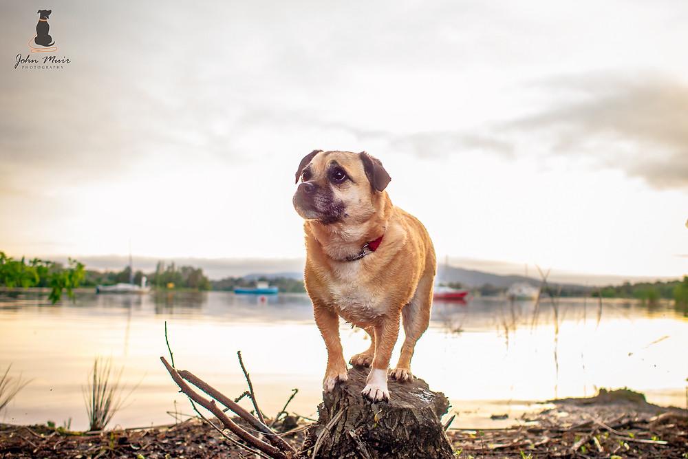 Chloe - Flexing her balancing skills - Weston Park, Canberra