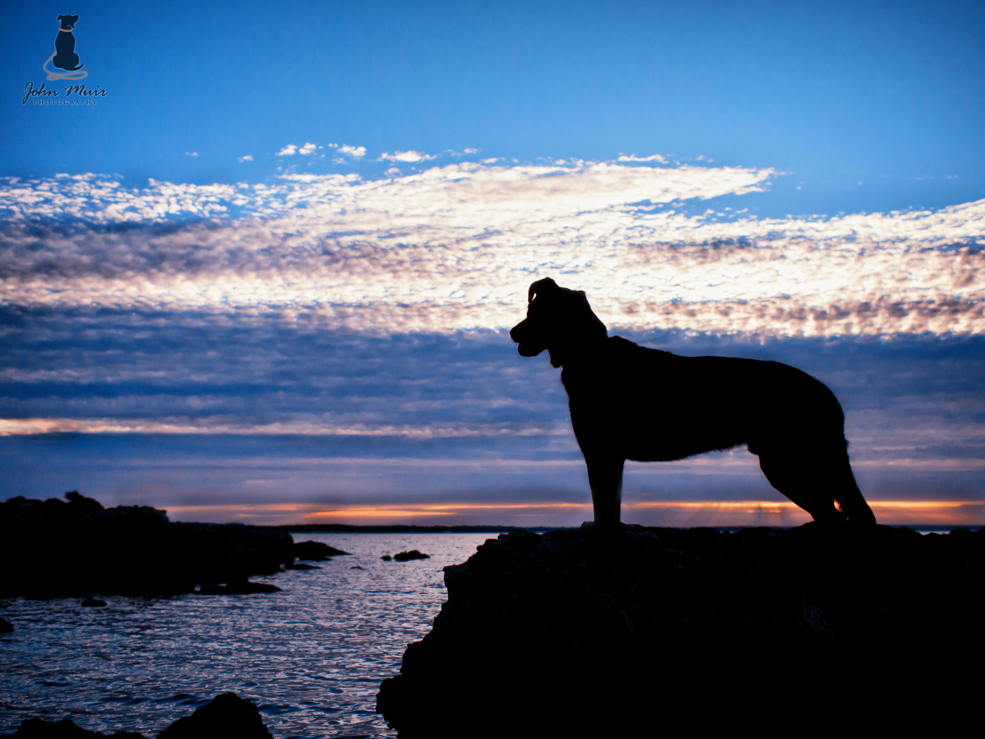 Logan - Kangaroo Island Silhouette