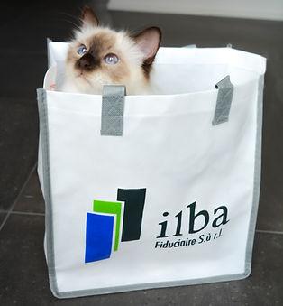 Ilba Katze