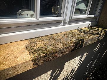 Hautcharage Kimmes Fassadenreinigung vor
