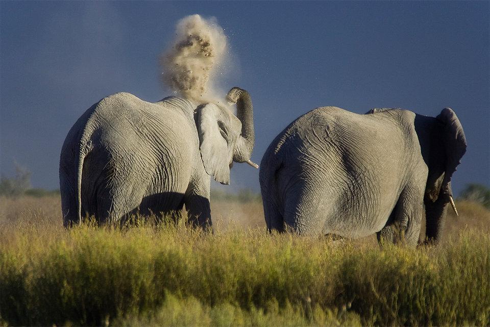 Elefanti sabbia.jpg