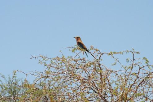 995_namibia_34.jpg