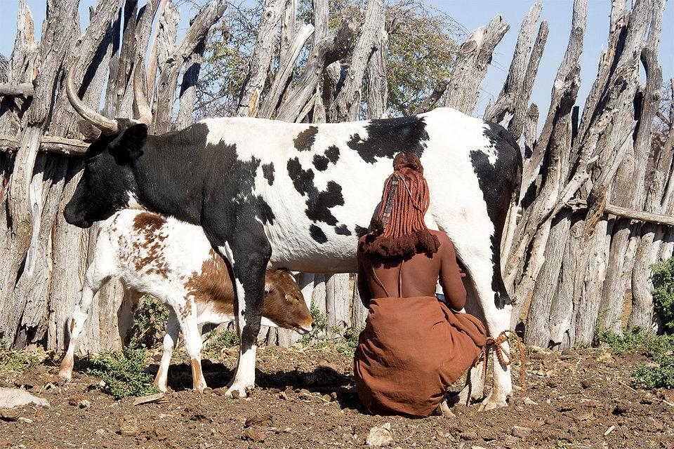 Himba che munge.jpg