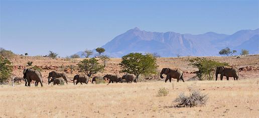980_elefanti-nel-damaraland.jpg