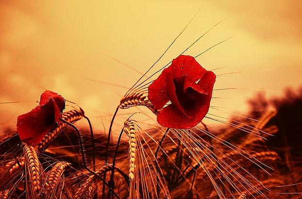 poppy-3215269_640.jpg