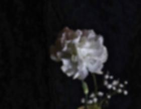 flower1_edited-1.jpg