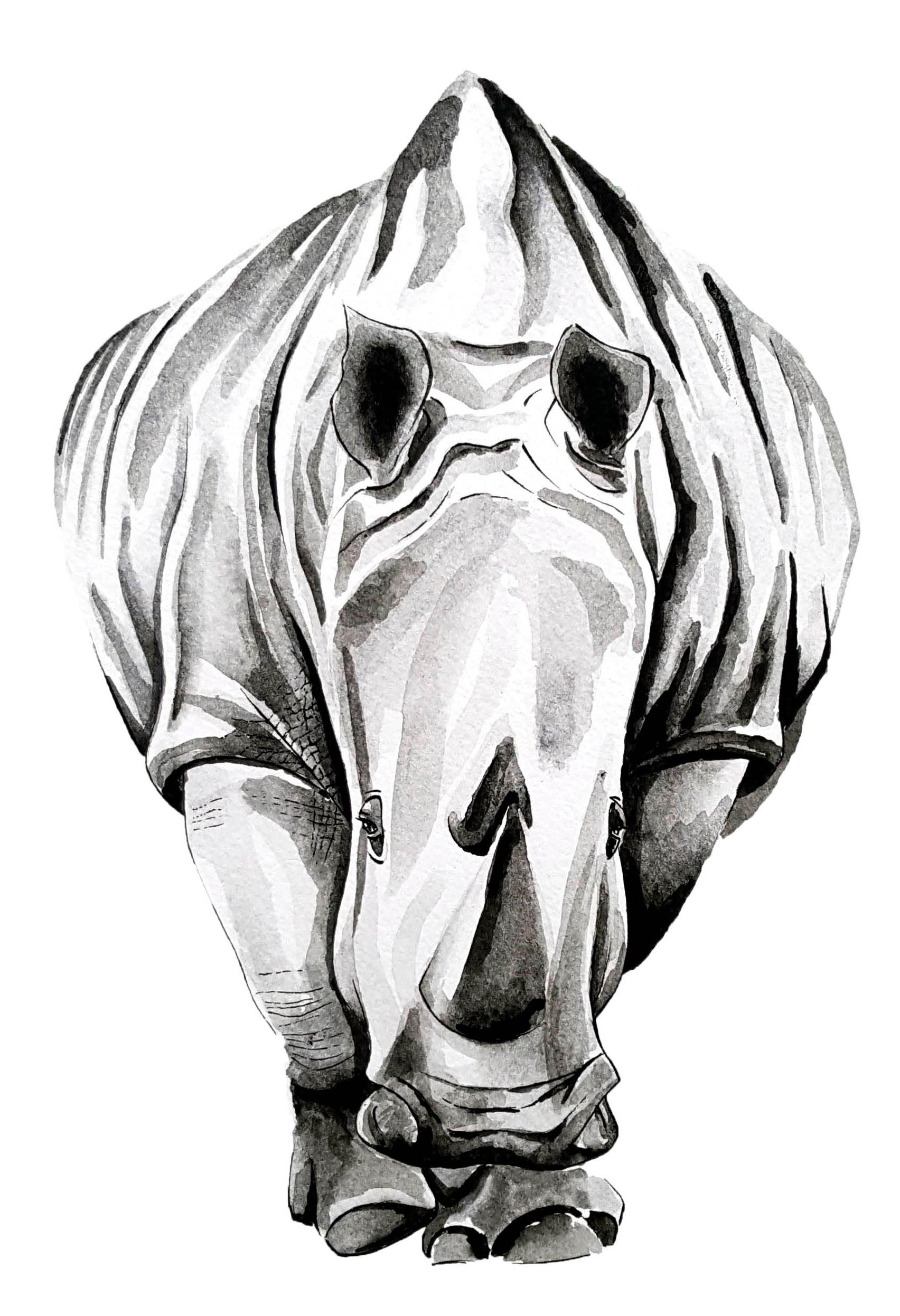 Rhino - Aquarelle