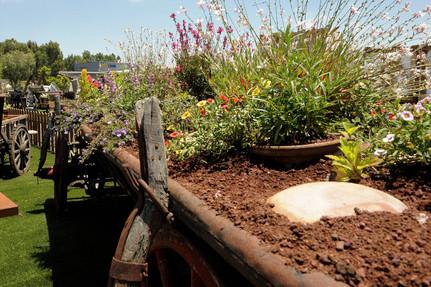 כרכרה עתיקה לגינה