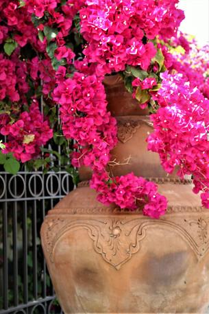 פרחים בגינה