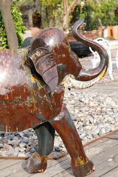 פיל מפח