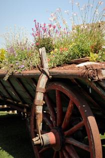 כרכרה לצמחיה ופרחים