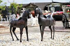 סוסים מפח