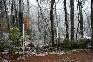 Southern Snowfall