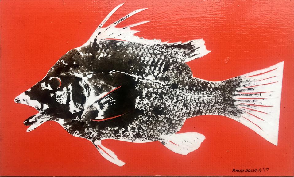Raw Hogfish Print