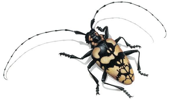 longhorn-beetle.jpg