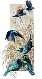 glossy-starlings.jpg