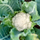 Thumbnail: Cauliflower (6oz)