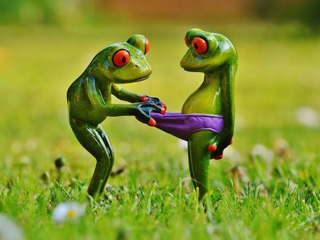 La petite grenouille entrepeneur (1)