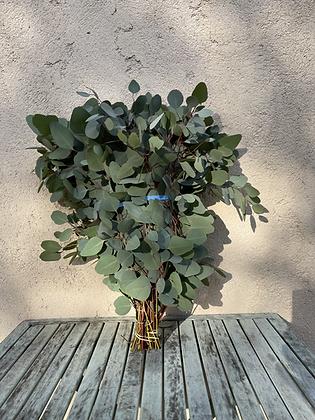 Populus GREEN 200g