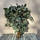 Thumbnail: Populus GREEN 200g