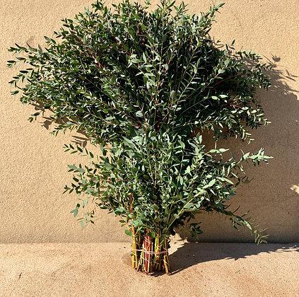 Parvifolia par 10 bottes 300g / 2,50€