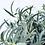 Thumbnail: Radiata GREEN 200g