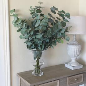 Bouquet de Cinerea